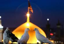 دانلود آهنگ امام رضا قربون کبوترات با کیفیت بالا