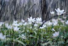 برف و باران در ۱۵ استان/ هشدار سیل در گلستان