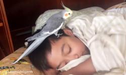 بازی عروس هلندی با کودک در خواب ( فیلم)