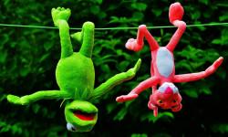 مجموعه تصاویر عروسک پلنگ صورتی و قورباغه