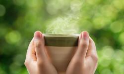 فواید بیدمشک و چایی بید مشک + طرز تهیه ی چای بیدمشکی
