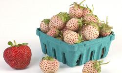 خواص توت فرنگی آناناسی (پاینبری)