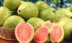 15 خاصیت دارویی و درمانی بی نظیر میوه گواوا