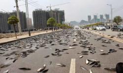 پدیده بارش ماهی از آسمان چطور اتفاق می افتد ؟