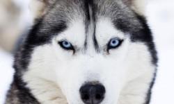 مدفوع خوردن سگ - علل و درمان فوری (Coprophagia)