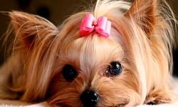 علل بیماری دیسمپر در سگ،درمان و تشخیص دیستمپر ویروس درسگ