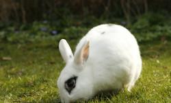چه مکان را برای نگهداری خرگوش در خانه در نظر بگیریم ؟ + فیلم