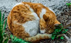 موارد مصرف و عوارض آمپی سیلین در حیوانات