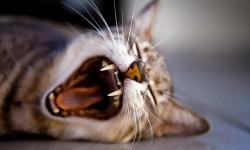 7 علت لنگیدن پای گربه و توصیه دکتر + فیلم