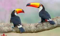 برندگان مسابقه عکاسی از پرندگان سال ۲۰۱۸