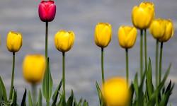 تصاویری زیبا  از رسیدن فصل بهار و شکوفه کردن گلها زیبایی ایران را دوچندان کرد