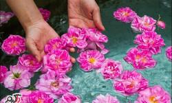 خواص دارویی و درمانی گلاب