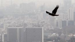 چند توصیه مهم در زمان آلودگی هوا