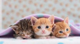 نگهداری از بچه گربه ، چگونه بچه گربه تاز متولد شده بزرگ کنیم