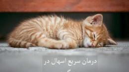 اسهال در بچه گربه :: علل و درمان سریع خانگی