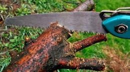 لیست قیمت چاقو و اره باغبانی