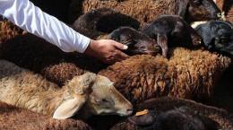 دعای هنگام ذبح کردن و آداب ذبح گوسفند در عید قربان