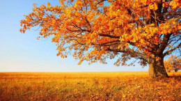 خفن ترین و رومانتیک ترین متن و جملات عاشقانه پاییزی دونفره
