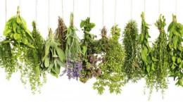 این ۲۰ گیاه دارویی باعث سقط جنین می شوند!