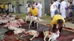 آیا ممنوعیت قربانی کردن گوسفند در عربستان صحت دارد؟