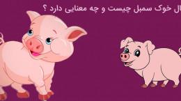 سال خوک سمبل چیست و چه معنایی دارد ؟