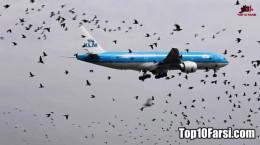 آیا برخورد پرندگان به هواپیما باعث سقوط آن میشود ؟
