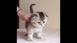کلیپ جالب و خنده دار از بچه گربه های بانمک