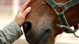 10 بیماری شایع در اسب که ریشه در علل عفونی دارد