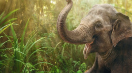 تعبیر خواب کامل  فیل : 62 نشانه و تعبیر دیدن فیل در خواب