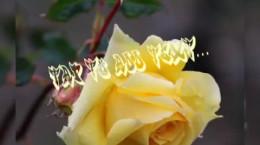 کلیپ و آهنگ شاد تبریک عید مبعث به عربی