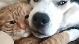 کلیپ دیدنی ازمحبت سگ ها به حیوانات دیگر