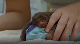 نوزادان تازه متولد شده حیوانات که تا کنون ندیده اید