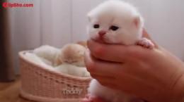 کلیپ بامزه از گربه 17 روز بعد تولد