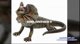 ۳۲ تا از عجیب ترین حیوانات نادر جهان
