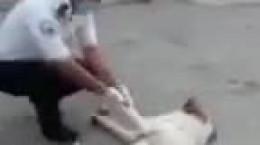 ماجرای پناه بردن یک سگ به اورژانس