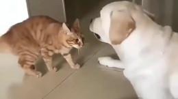 کلیپ باحال و دیدنی حیوانات