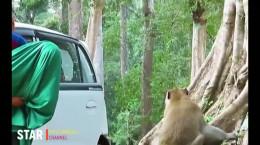کلیپ فوق العاده زیبای راز بقا و دنیای حیات وحش آفریقا