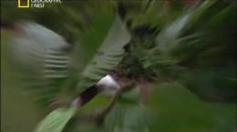 کشنده ترین حیوانات جهان - کاستاریکا
