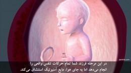 هفته بیست و دوم ۲۲ تا بیست و پنجم ۲۵ دوران بارداری