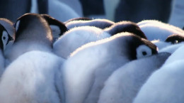 مستند جوجه برفی: داستان یک پنگوئن دوبله فارسی