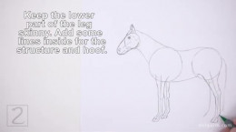 آموزش نقاشی و طراحی اسب