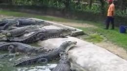 غذا دادن به حیوانات در حیات وحش