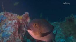 مستند وحشی ترین مناطق اقیانوس آرام