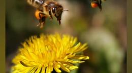 زنبور ها چند چشم دارند ؟