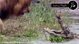 خشن ترین نبرد حیوانات وحشی در حیات وحش