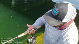 گشت و گذاری با ماهی کپور