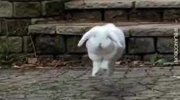 ویدیویی بامزه از پرش های متفاوت یک خرگوش
