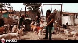 ویدیویی به مناسبت روز جهانی سگ