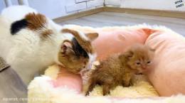کلیپ حمام دادن بچه گربه