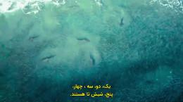 مستند سینمایی دار و دسته کوسه ها زیرنویس فارسی